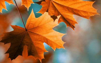 Shifting of the Seasons